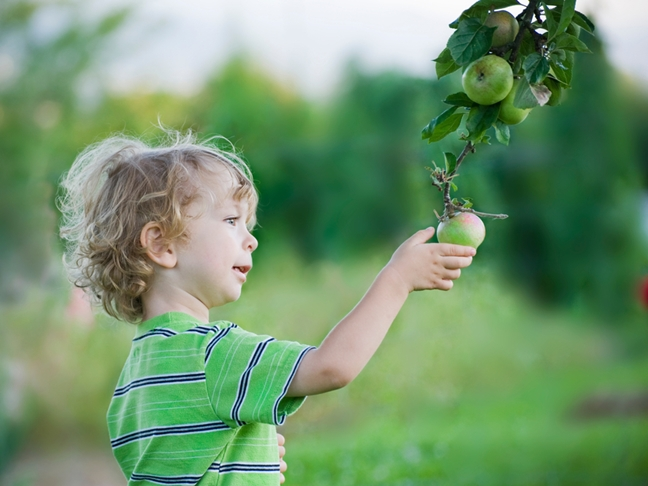 Apple Picking with Kids