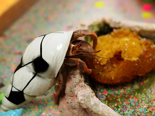 good-pets-for-kids-hermit-crab