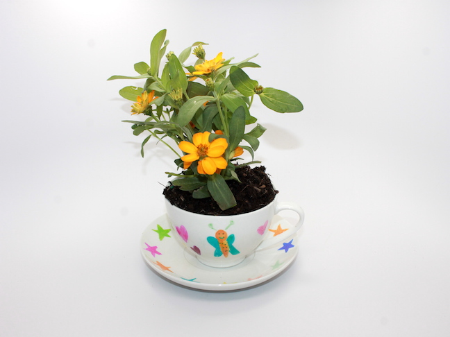 teacup with flower in it