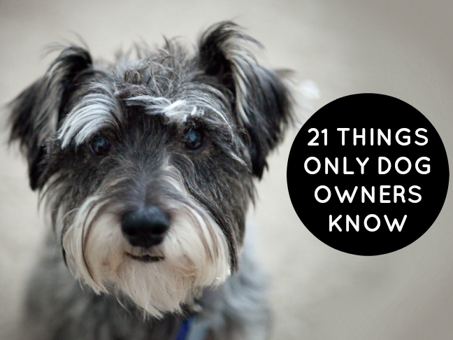 21 Things Only Dog Owners Know is a funny list all dog lovers can relate to on @ItsMomtastic