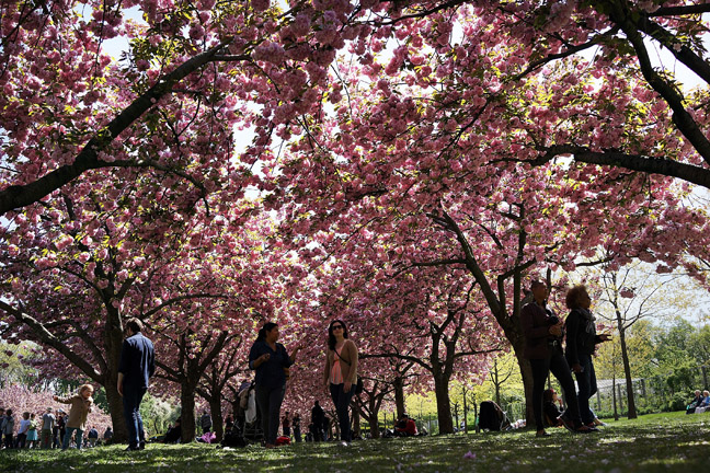 Spring Comes To Brooklyn Botanical Gardens