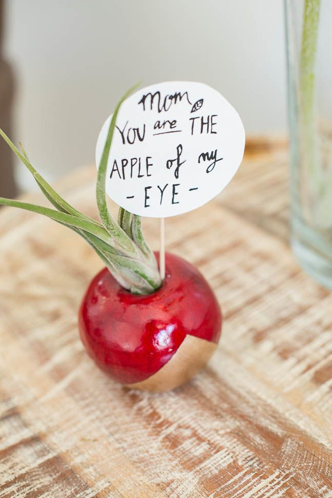 apple-air-plant-mothers-day-diy-gift-planter-gold-red