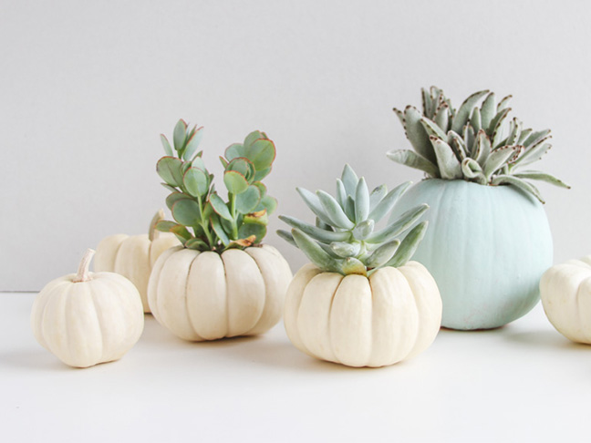 How to Make Mini Pumpkin Planters