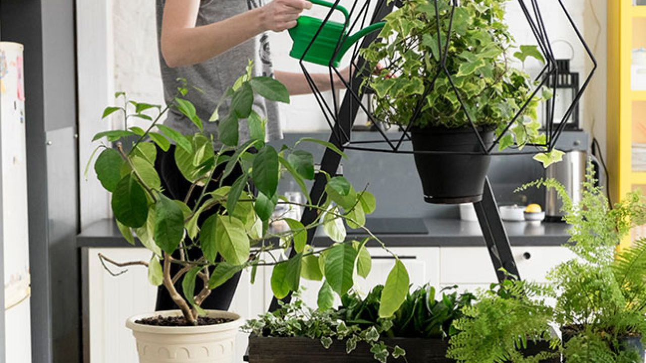 Reasons Why You Have To Bring Potted Plants Indoors