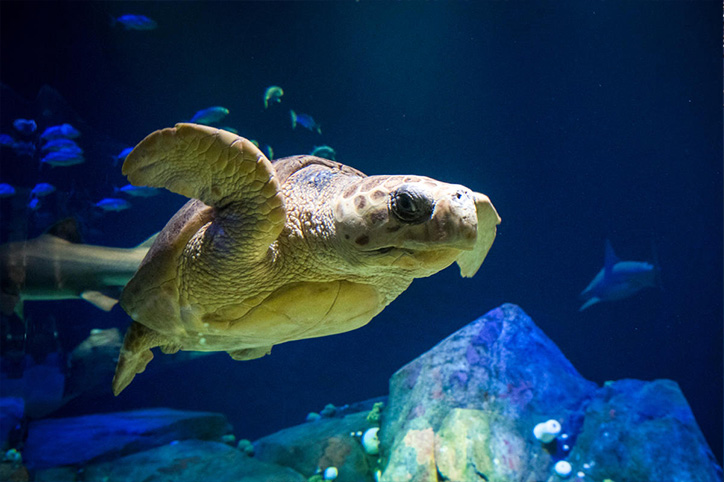 The 10 Best Aquariums to Visit During a Family Vacation