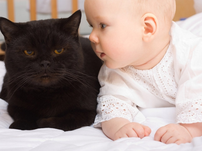 Cats and Babies Living Together