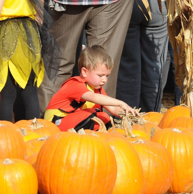 Mark Wahlberg's son Michael, pumpkin patch